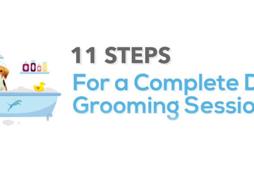 11 Steps For a Complete Dog Grooming Session