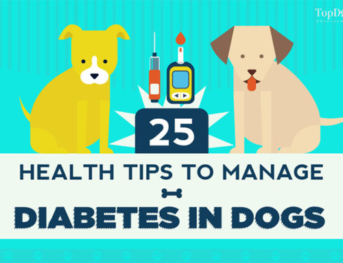 25 Ways to Manage Diabetes in Dogs