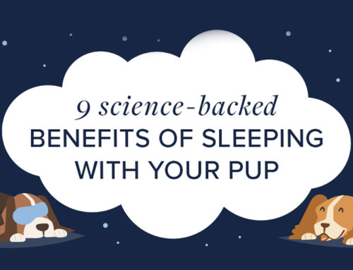9 Science-Backed Benefits of Sleeping With Your Pup