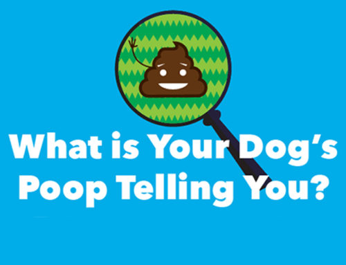 What is Your Dog's Poop Telling You?