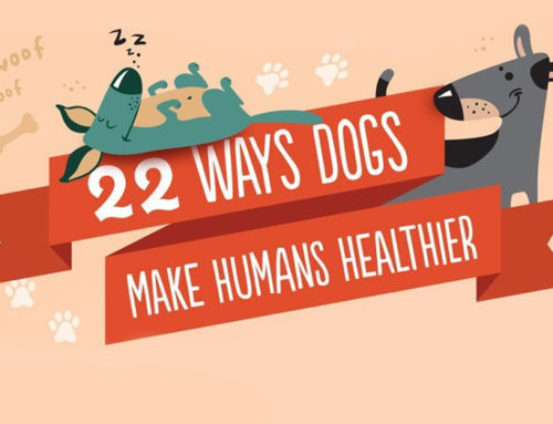 22 Ways Dogs Make You Healthier