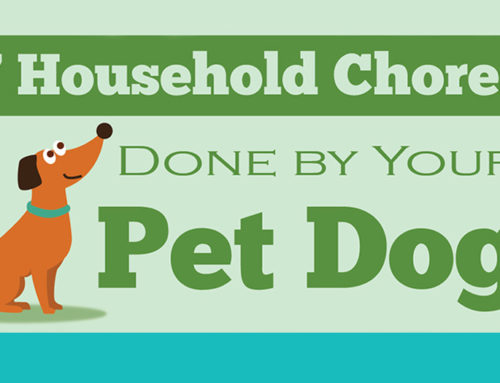 7 Household Chores Done By Your Pet Dog