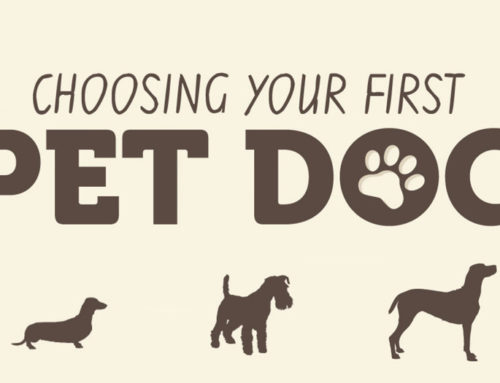 Choosing Your First Pet Dog
