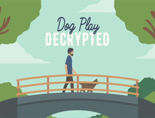 Dog Play Decrypted