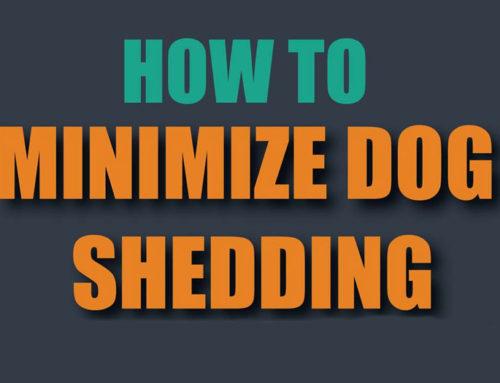 How to Minimise Dog Shedding